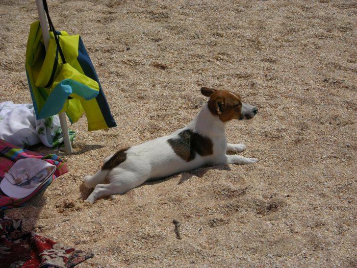 Checkliste Urlaub mit Hund